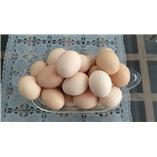 Trứng gà ta